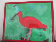 Liam - Ibis